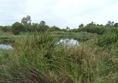 Queens Park Eco-hydrological Assessment, Queens Park, WA